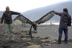 智利海滩现上千只鸟类尸体