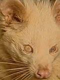 江西抓获一奇特生物 双眼发光发怒后变红色