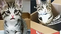担心猫成网红 斗鸡眼八字眉自带表情包