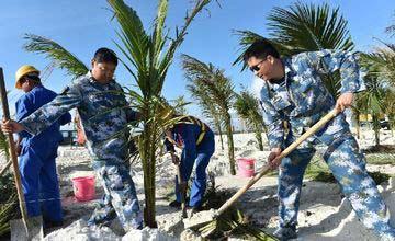 为南沙添绿:守礁官兵在渚碧礁上种植椰子树