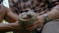 实拍丛林部落捕获世界最长森蚺莽 长5.2米