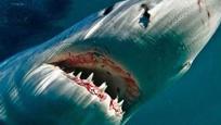 美国男子在艇边挂饵钓鱼 大白鲨夺食险将船掀翻