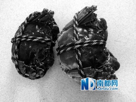 何永华/李女士买回来的大闸蟹。南都记者何永华摄