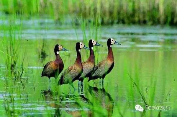新青国家湿地 -只有白头鹤知道的美景 这里除了供游人走路的木