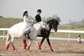马术婚礼,马背上的爱情