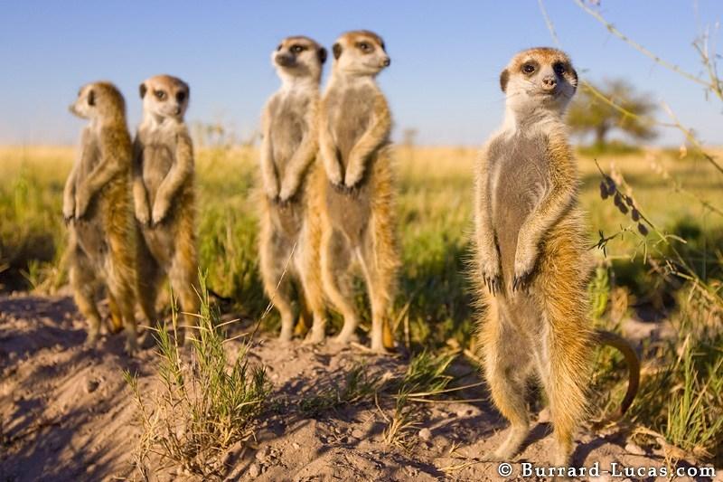 可以去很多地方,近距离接触很多动物园里都看不到的动物.但令人图片