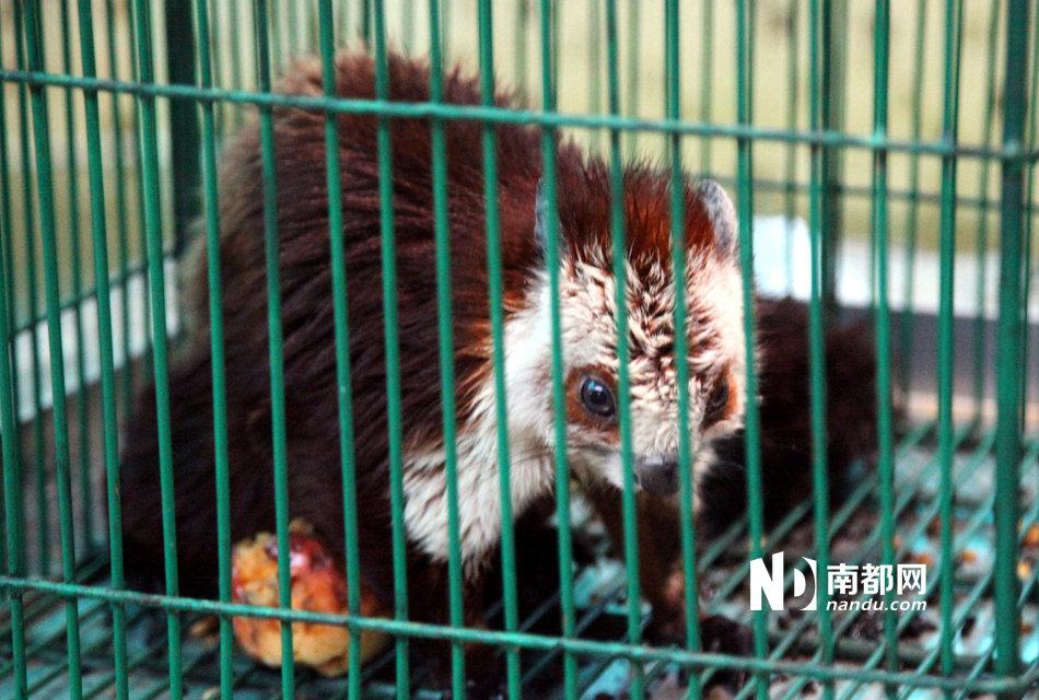 广州:保护动物公开卖 其它品种可预订