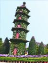 小榄菊会200年