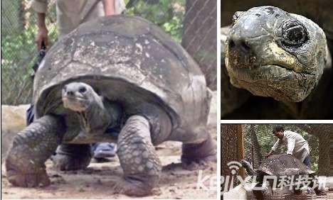 盘点动物世界十大老寿星:印度巨型陆龟活到226岁
