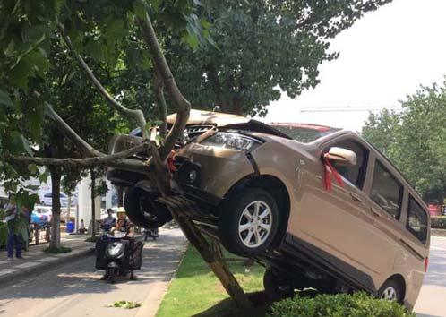 南京 汽车失误开车将男子开到树上(图)cadv汽车参考文献2016年图片
