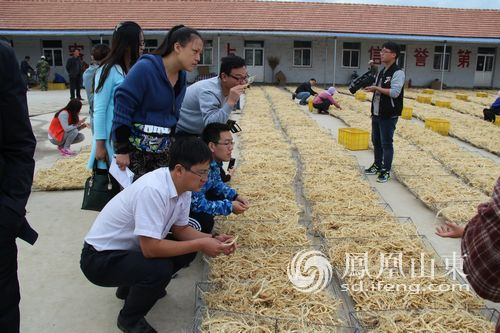 【E乐彩彩票平台】文登:4万亩打造中国最大西洋参种植基地