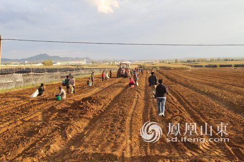 亩打造中国最大西洋参种植基地