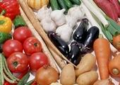 中国人的菜篮子——寿光蔬菜