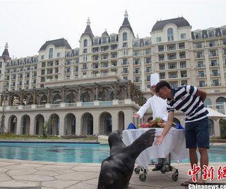 山东土豪为萌宠海狮庆生 预定五星酒店
