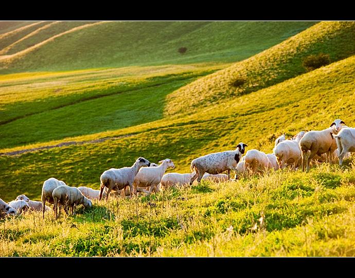 内蒙·美丽的草原牛羊肥壮马儿欢