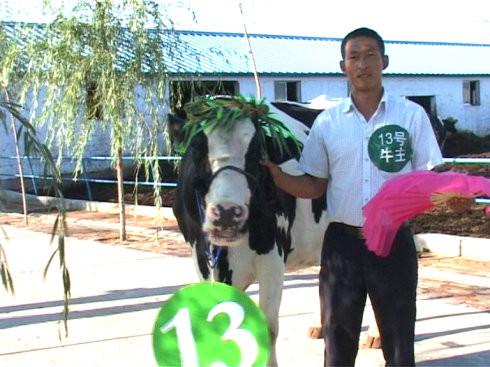 """山阴/1号牛主:""""竹板一敲呱呱叫,俺家的牛儿就是好,外貌好,内在好..."""