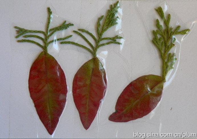 分享到:做手工1):树叶画之植物篇