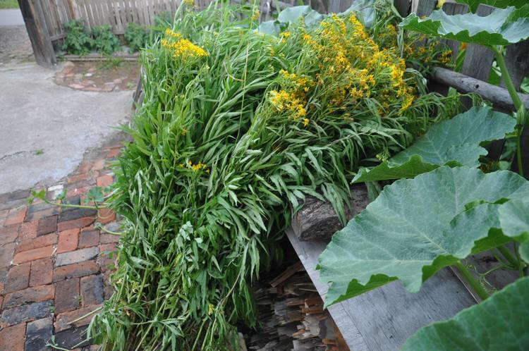 得天独厚的环境,使根河市经济植被种类多,分布广,蕴藏量大。据统计,根河的材用植物主要有针叶树兴安落叶松和樟子松、阔叶树白桦、山杨;饲用植物主要有贝加尔针茅、日阴菅等;食用野菜主要有蕨菜、黄花菜、柳蒿芽等;野果植物主要有越桔、笃斯越桔;纤维植物主要有芦苇、芨芨草、小叶樟、乌拉草、马蔺等;鞣料植物主要有稠李、水杨梅、萎陵菜、地榆、接骨木、落叶松(树皮)、白桦(树皮)等;油料植物有偃松(籽实)、西伯利亚杏、刺柏;芳香植物有大叶蔷薇、兴安杜鹃、狭叶杜香、毛蒿豆等;可供观赏植物有樟子松、偃松、兴安杜鹃、百合、萱
