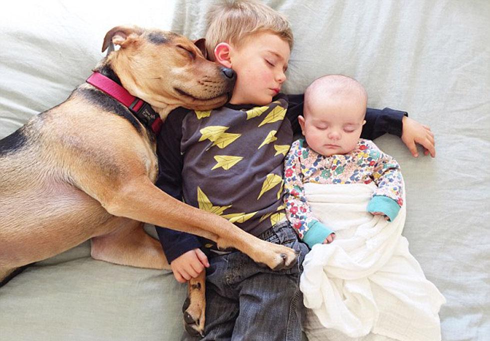 美国:可爱宝宝与宠物狗酣睡萌照走红网络