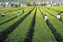 陕现代农业发展项目连续7年被财政部评为优秀