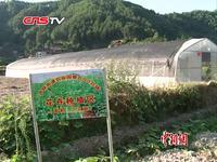 """贵州凯里尝试经营现实版""""QQ农场"""""""