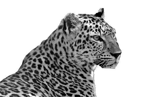 本次调查将用4年时间摸清陆生野生动物种群及栖息地,驯养繁殖利用等情