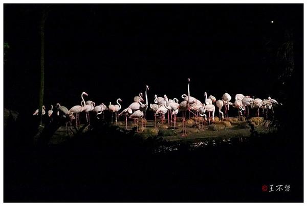 新加坡:神秘独特的夜间野生动物园