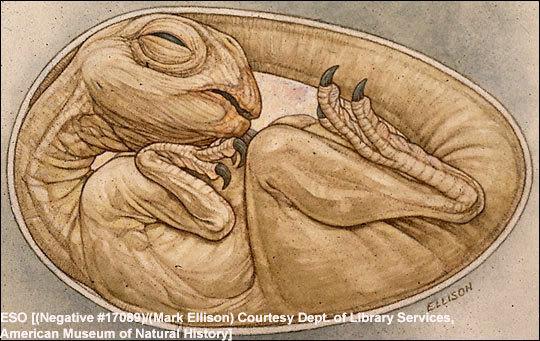 """恐龙""""婴儿""""胚胎"""