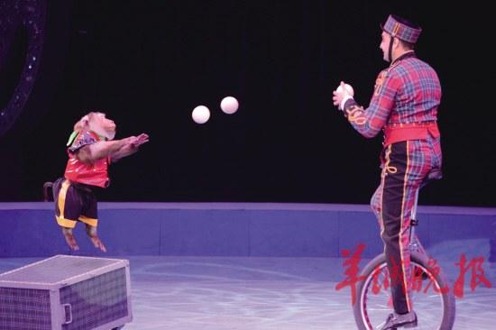马戏节昨开幕精彩国际节目轮番上演