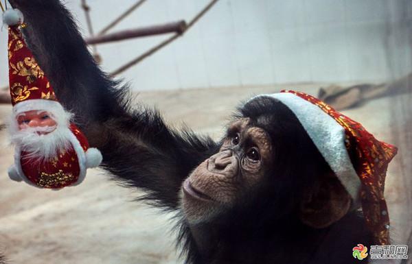 圣诞老人、圣诞贴画等圣诞饰物品 吉林东北虎的篮球宝贝们通过节日