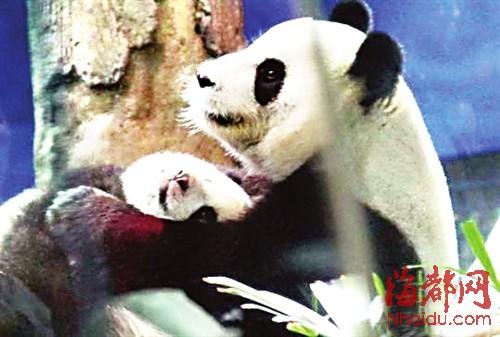 为看圆仔 万人涌入动物园|小孩子|张和民_凤凰资讯