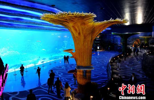 全球最大海洋主题公园在珠海横琴开张迎客