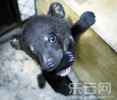 """动物收容拯救中心11个招人爱的""""熊孩子""""等你来看"""