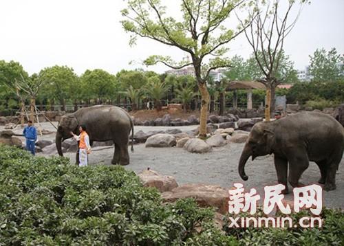 来源:上海野生动物园供图