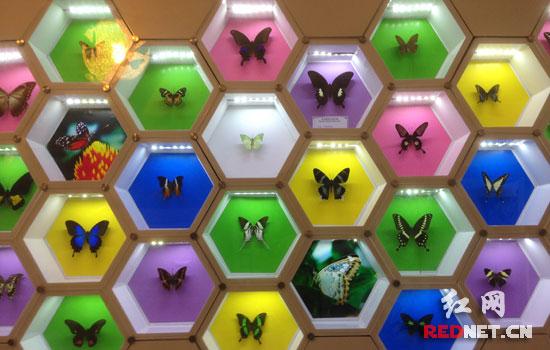 蝴蝶团花的步骤图解