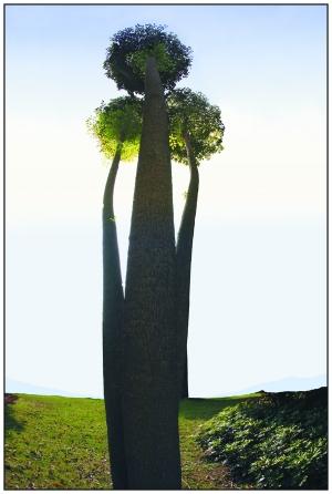壁纸 盆景 盆栽 树 植物 300_446 竖版 竖屏 手机