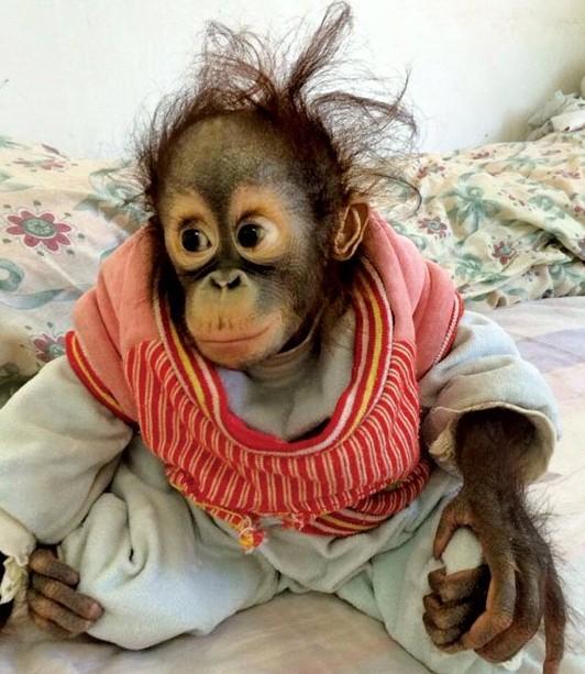 云南野生动物园 新生动物宝宝齐亮相明天来与它们一起
