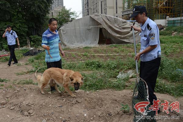 无证犬,流浪犬伤人扰民 雁塔警方加大抓捕力度
