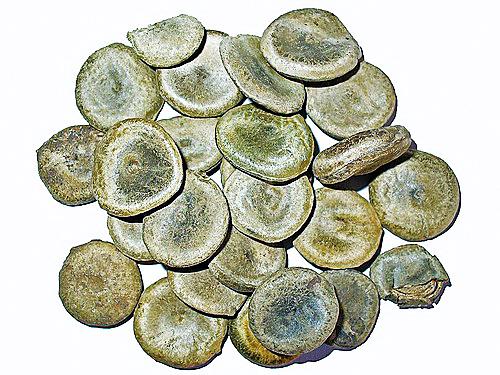 马钱子的植株与制成药的种子