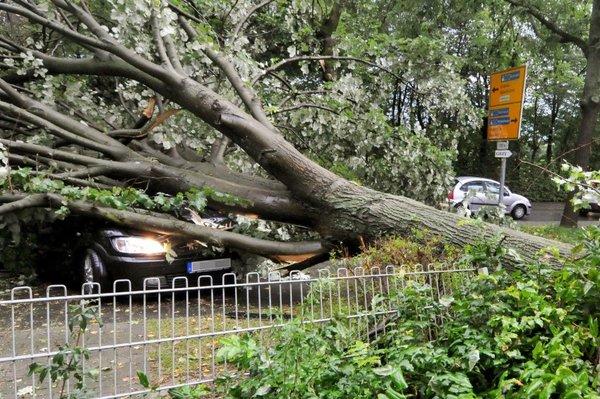 一棵大树被风刮倒砸在车上,导致车内的一名女子受重伤.