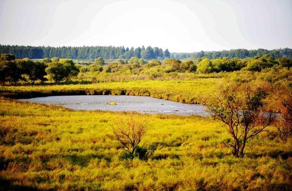 滚动新闻  珍宝岛湿地自然保护区位于黑龙江省虎林市东部,是三江平原