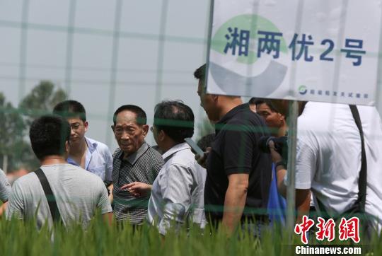 """目前他正在与基地合作实验种植一款水稻""""核武器""""。 李东升摄"""