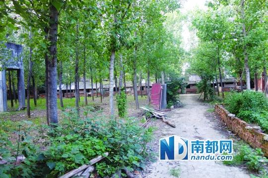 促使张海新走上维权路的8亩村地。