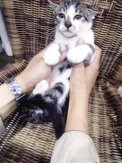 可爱猫咪求收养|网友|宝宝_凤凰资讯