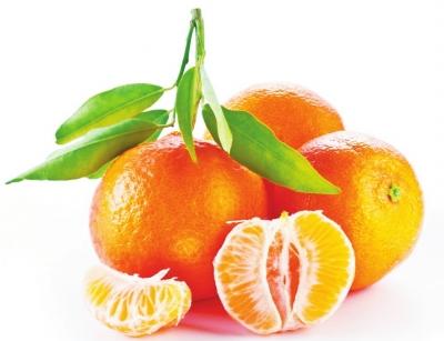 橘子剖面图手绘