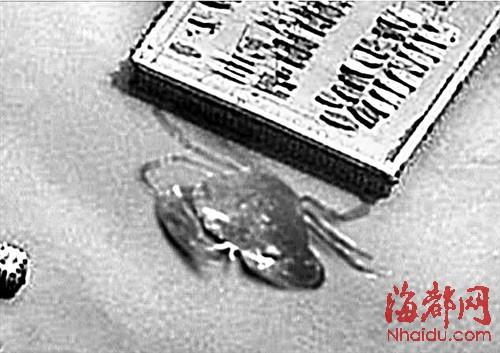 简笔画螃蟹步骤图解
