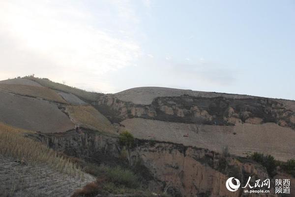 横山县长峁墕村敞阳湾发现一处明代民居群,共14孔窑洞,目前全部掩埋在土下。图中插旗处就是窑洞所在方位。高岗/摄