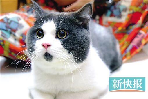 """吃惊的表情,网友称之为""""omg""""猫,纷纷表示猫咪的神态超级像萌娃王诗龄."""