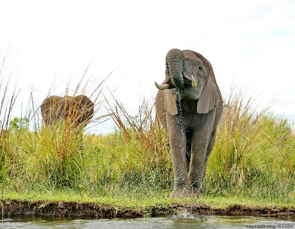 赞比亚(2)动物王国赞比西(lower zambezi)之一