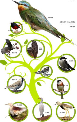 手工种子贴画图鹅-制图 杨波 图/新疆观鸟会提供鸟网-新疆10年拍到41个新鸟种